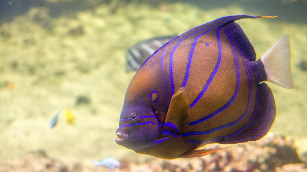 Aquarium Nausicaa Dsc_4123
