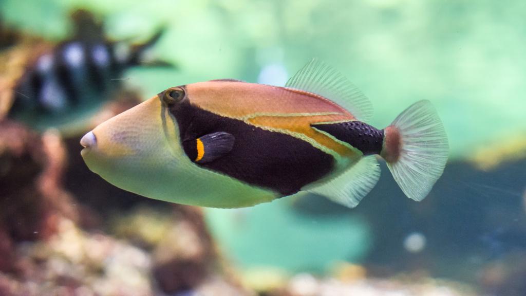 Aquarium Nausicaa Dsc_4124