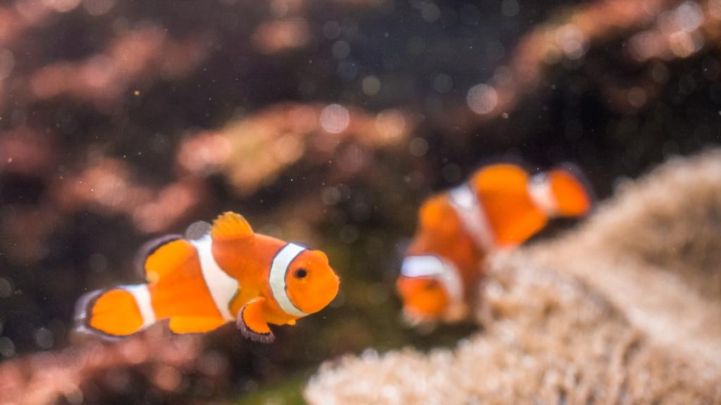 Aquarium Nausicaa Dsc_4125