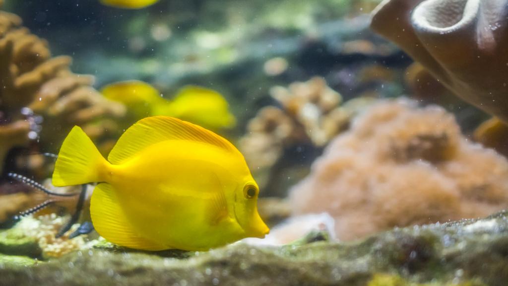 Aquarium Nausicaa Dsc_4126