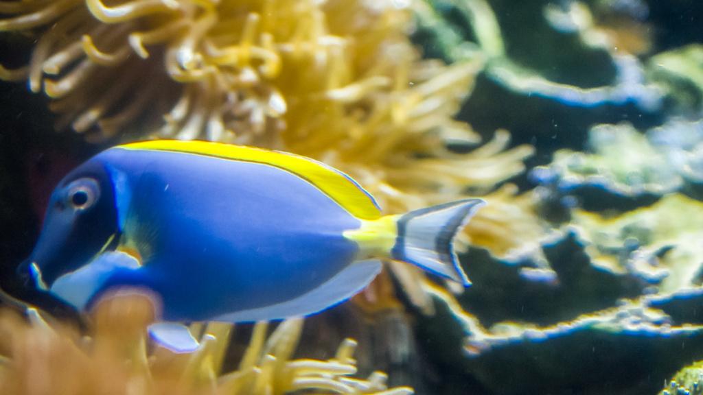Aquarium Nausicaa Dsc_4127
