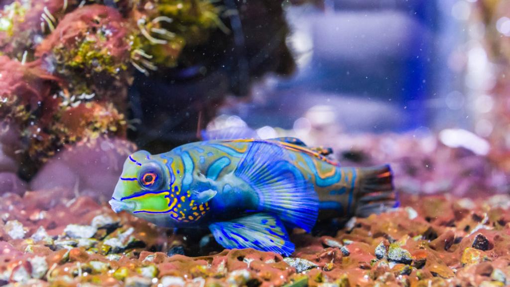 Aquarium Nausicaa Dsc_4130