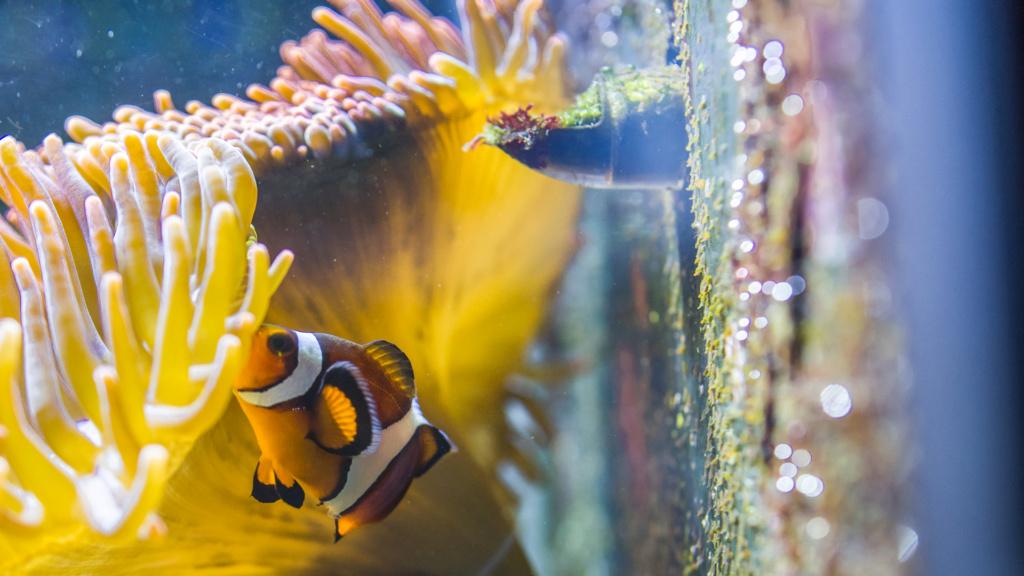 Aquarium Nausicaa Dsc_4131