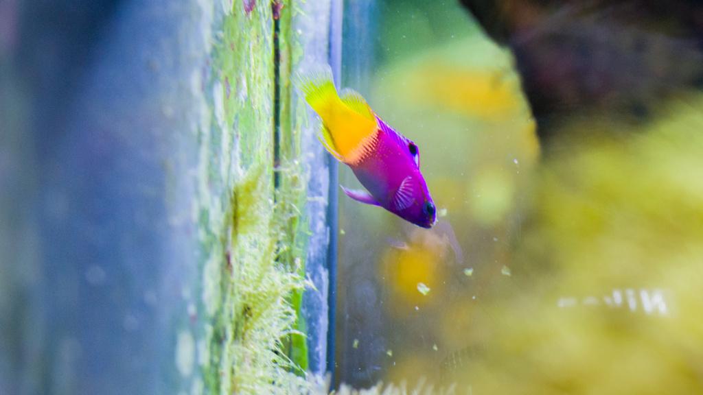 Aquarium Nausicaa Dsc_4132