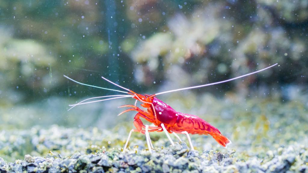 Aquarium Nausicaa Dsc_4133