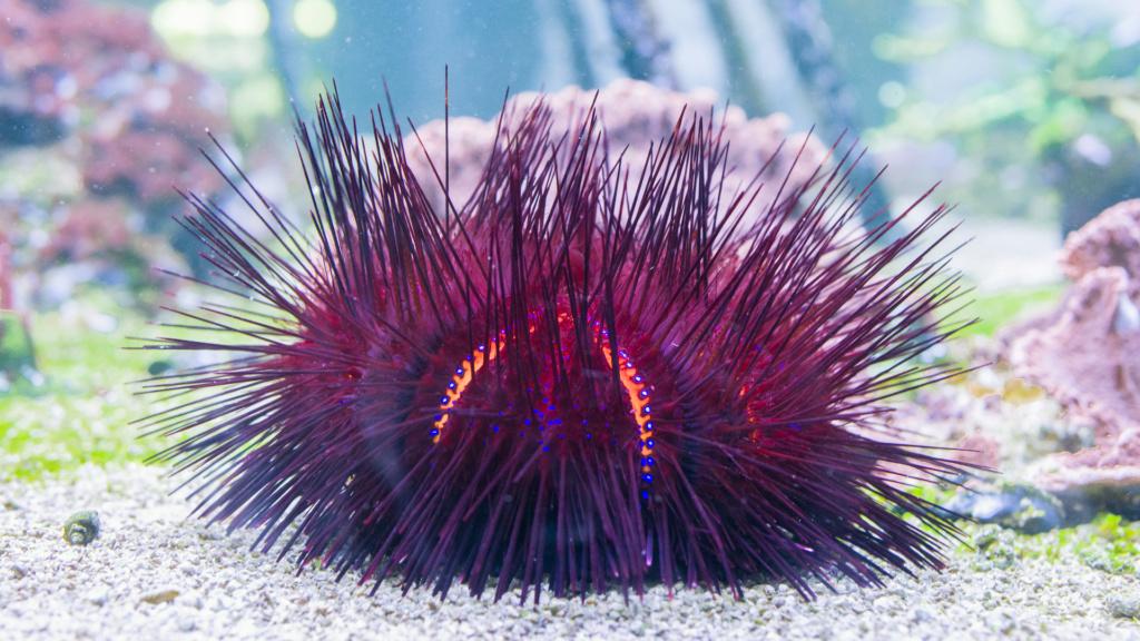 Aquarium Nausicaa Dsc_4135