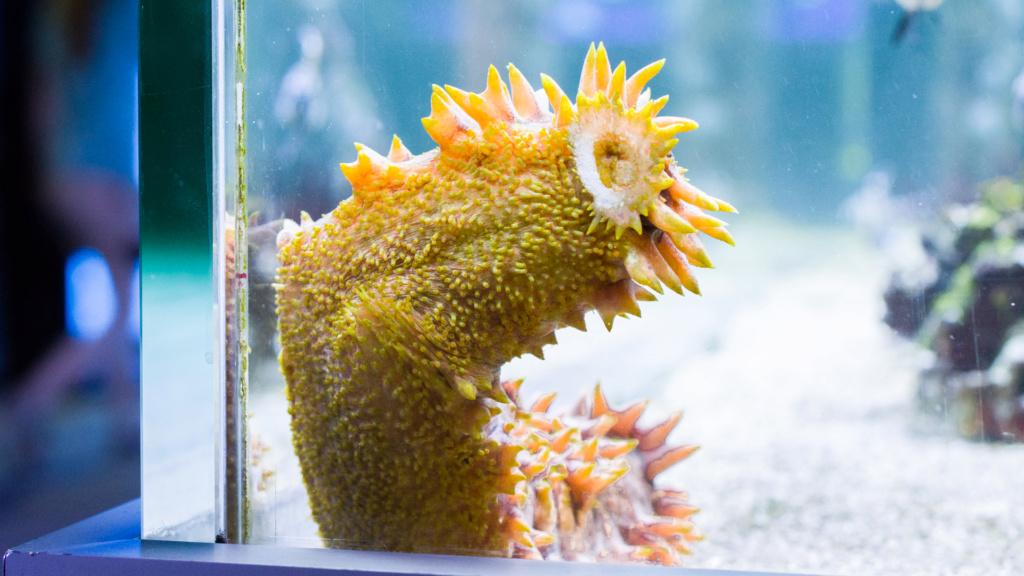 Aquarium Nausicaa Dsc_4136