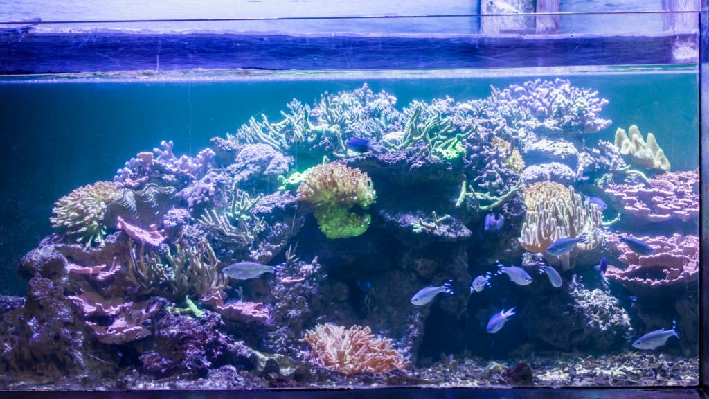 Aquarium Nausicaa Dsc_4137
