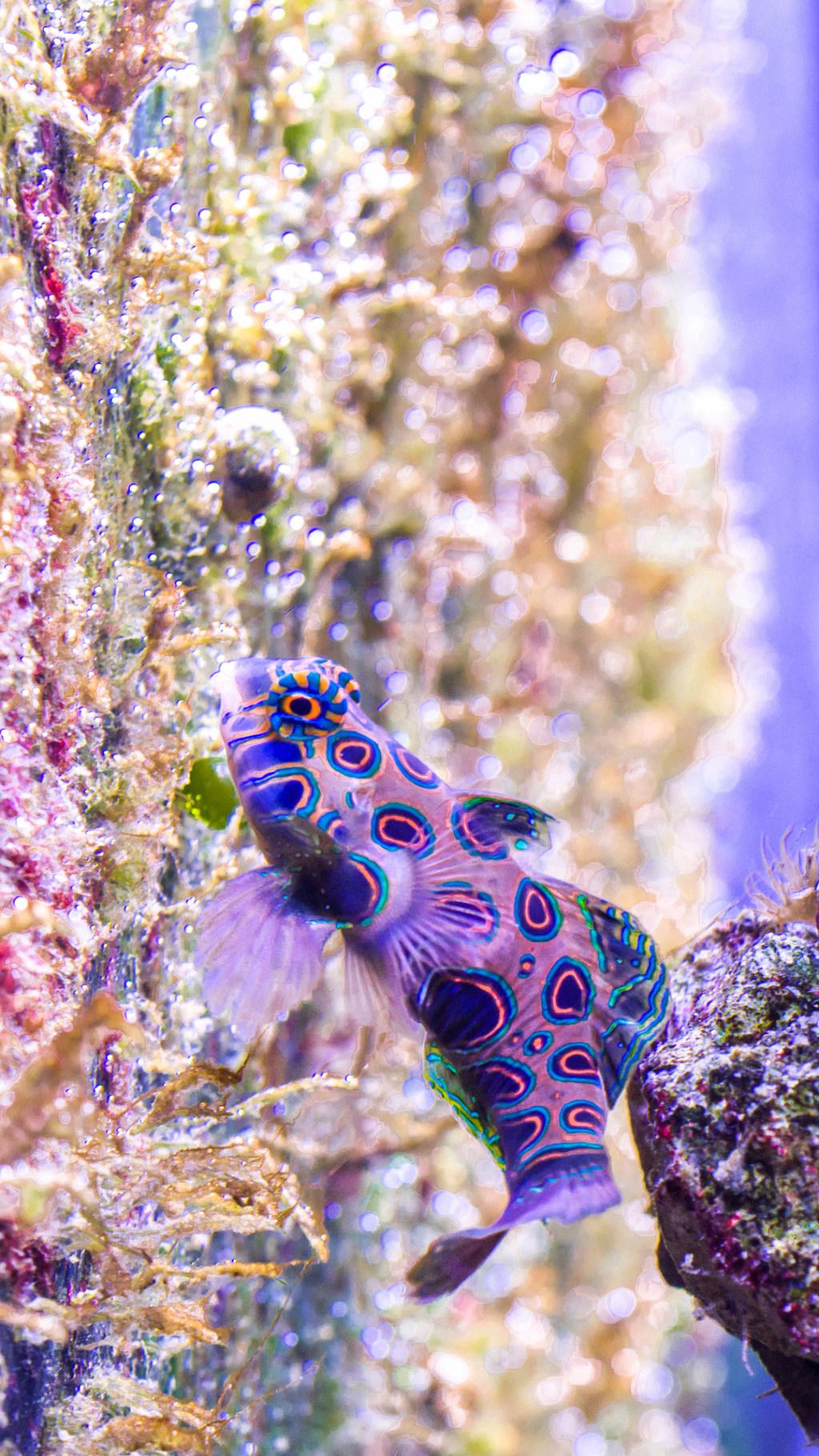 Aquarium Nausicaa Dsc_4138