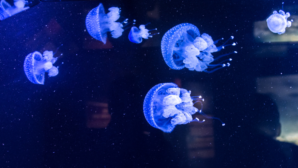 Aquarium Nausicaa Dsc_4210