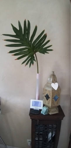 Philodendron ?? 20200511