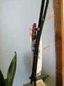 Mon orchidée fait n'importe quoi...  Img_2013