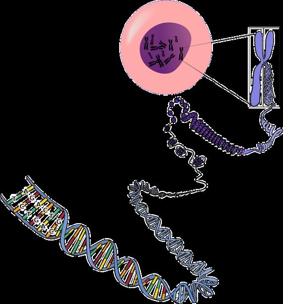 """Финансируемые NASA учёные создали """"внеземную"""" ДНК. 110"""