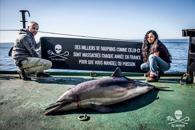 Mort massive de dauphins : Sea Shepherd pointe du doigt les chalutiers et les navires usines  Dauphi10