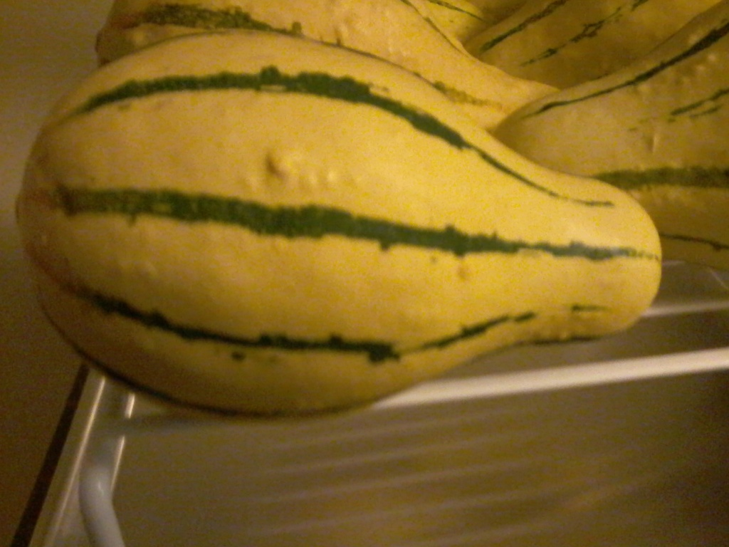 What squash is this? 20180811