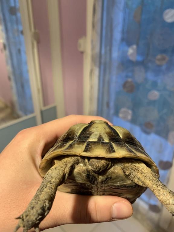 aide identification espace de mes 2 tortues Img_7810