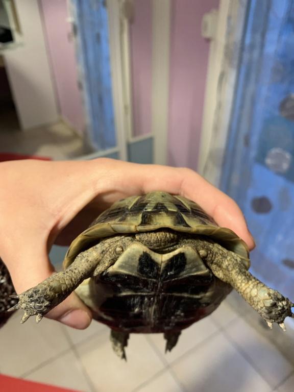 aide identification espace de mes 2 tortues Img_7811
