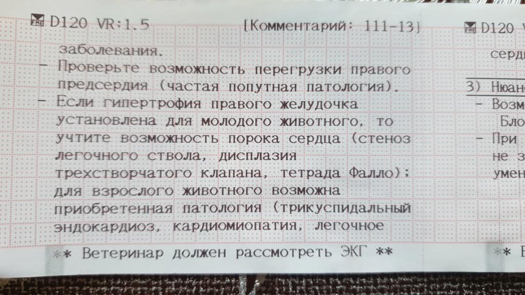 Москва. Цефей, кобель, 21.05.17 - Страница 18 Photo_10