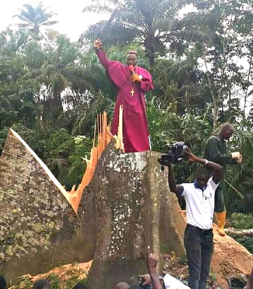 Pastor Storms Community, Cut Down 'Evil' Tree Said To Be 100 Years Old (See Photo) Evil10