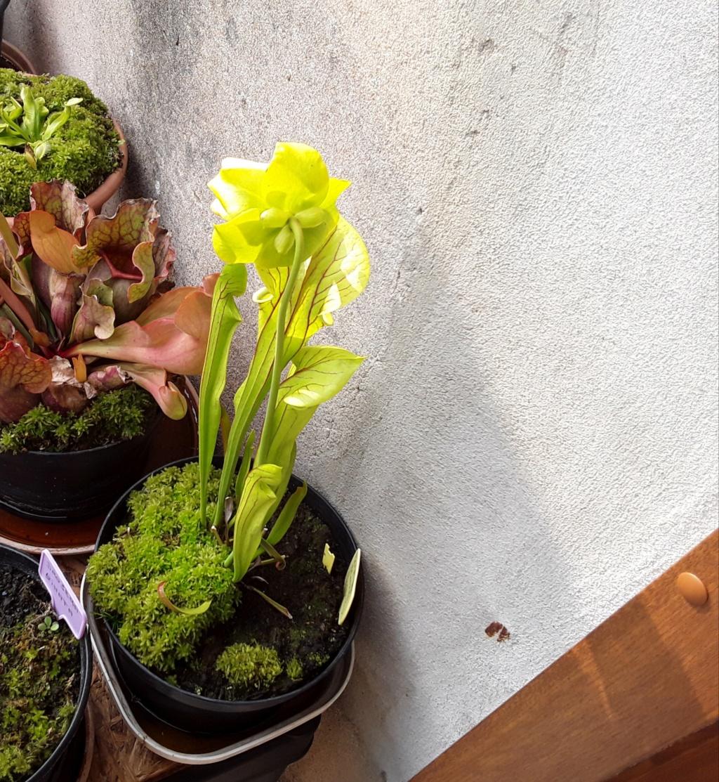 Ma première fleur 20190533