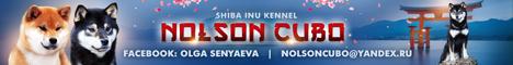 ярко рыжая девочка д.р. 10.12.20 от питомника NOLSON KUBO  A_u10
