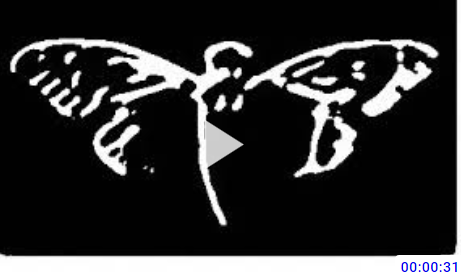 http://dktubezytam2tuxu.onion/watch/video-2019-05-14-065925_nCp9OWVRT3vtHog.html 2019-405