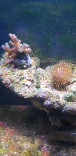 Identification algues 20190114