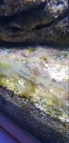 Identification algues 20190115