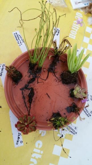 Recherche plantes Kiss_k12