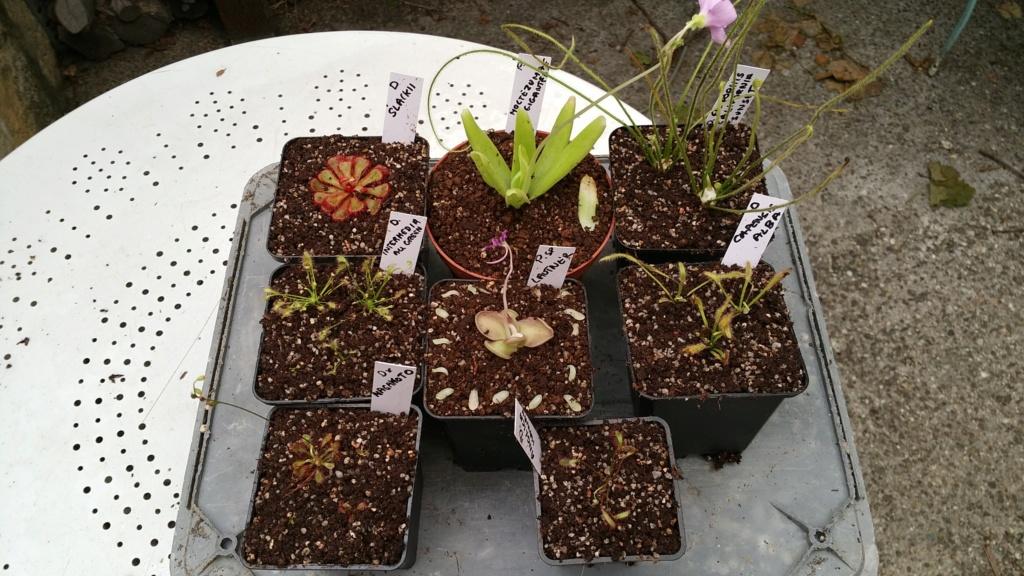 Recherche plantes Kiss_k13