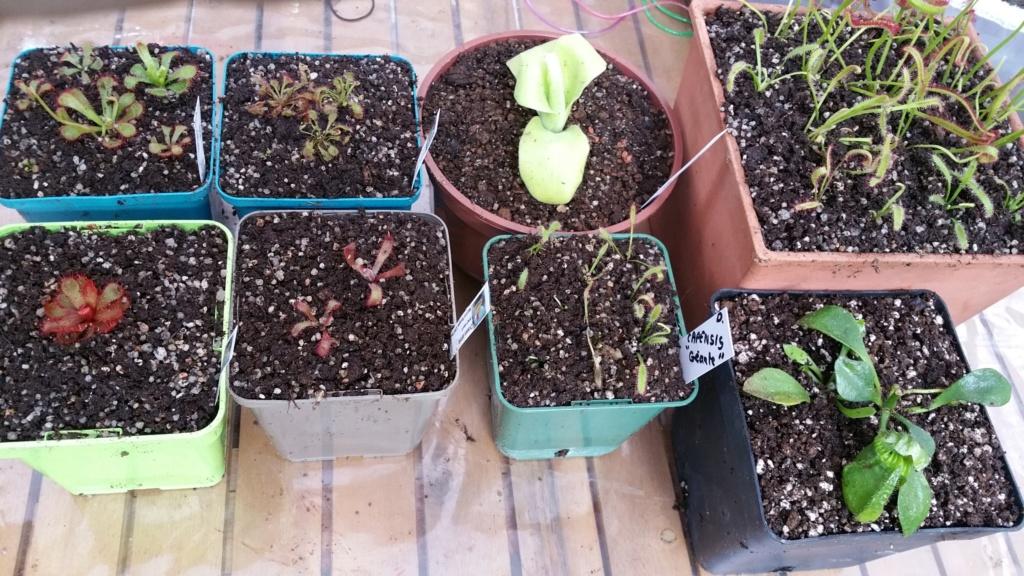 Recherche plantes Rempot10