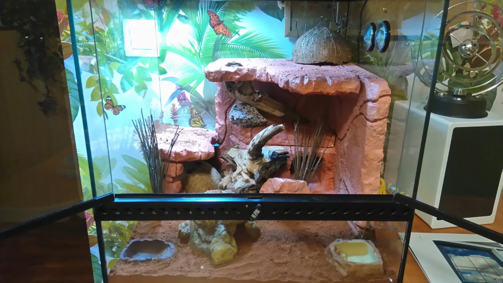 Terrarium gecko léopard Dsc_0010