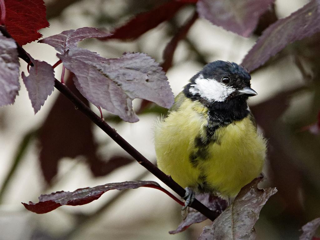 Quelques test oiseaux du jardin P1012110