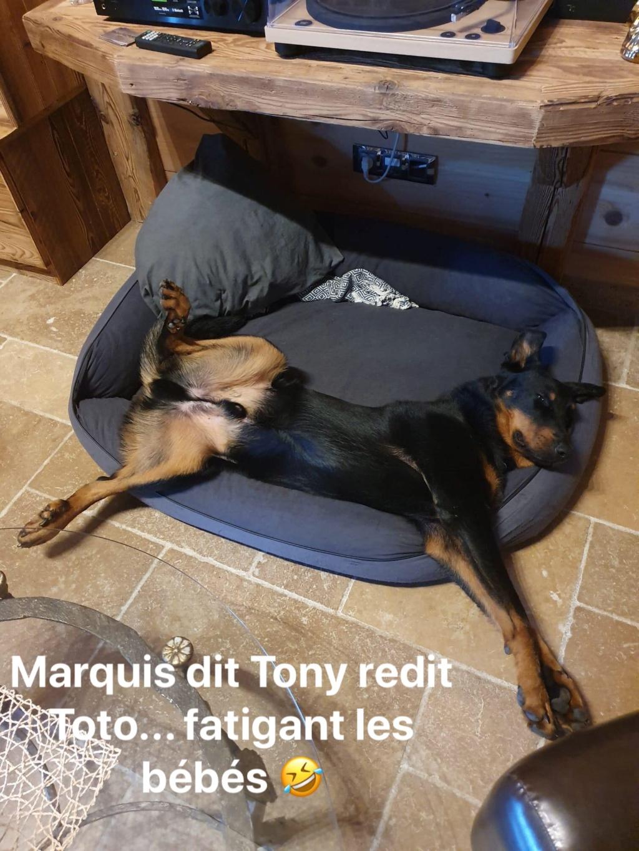 [Réservé] MARQUIS dit TONY - mâle Beauceron LOF - 2016 - Dépt 85 - FA Mélissa L - Page 2 Img_8710