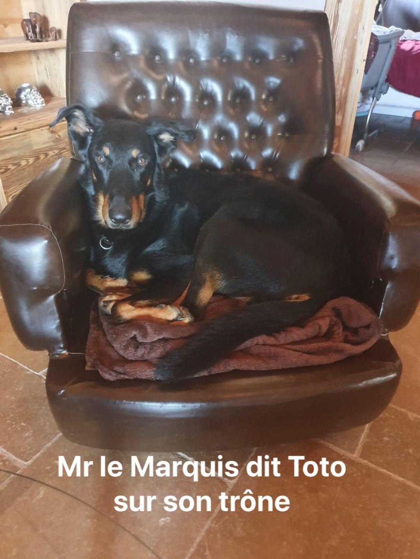 [Réservé] MARQUIS dit TONY - mâle Beauceron LOF - 2016 - Dépt 85 - FA Mélissa L - Page 2 Img_9011