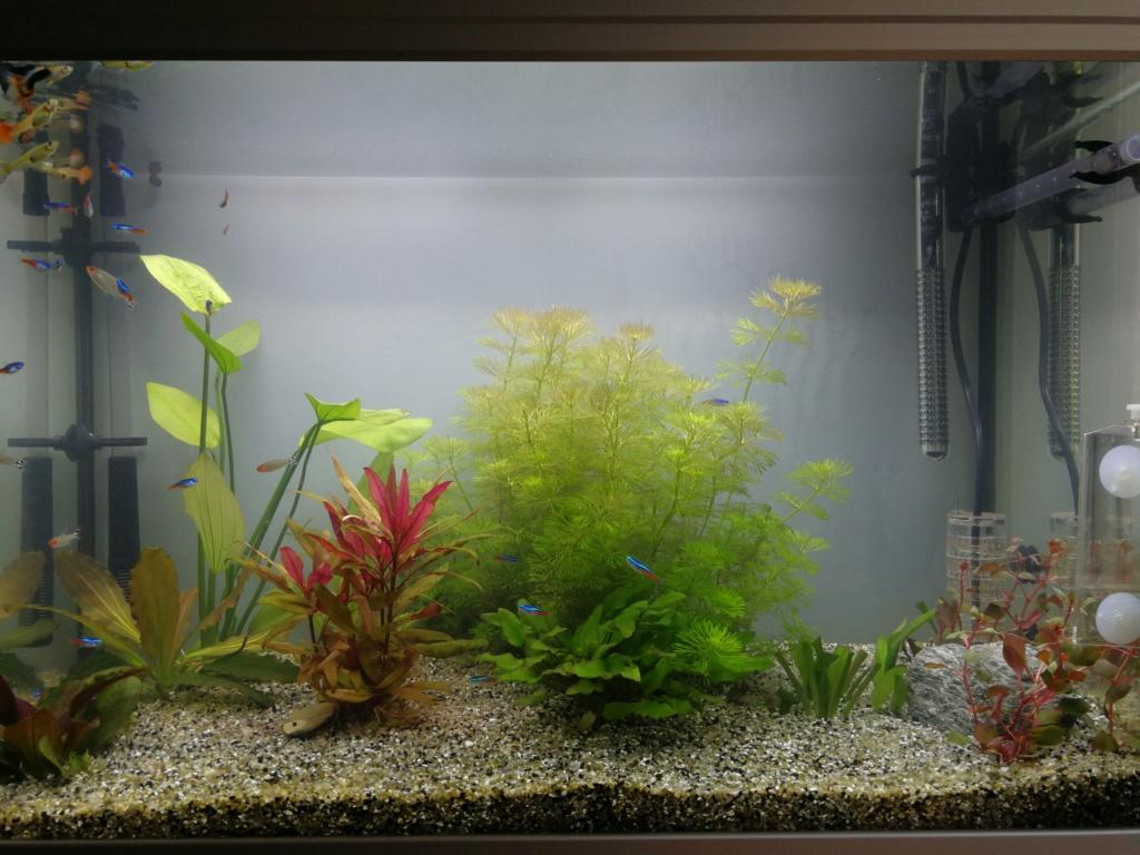 fond d'aquarium Img_2014