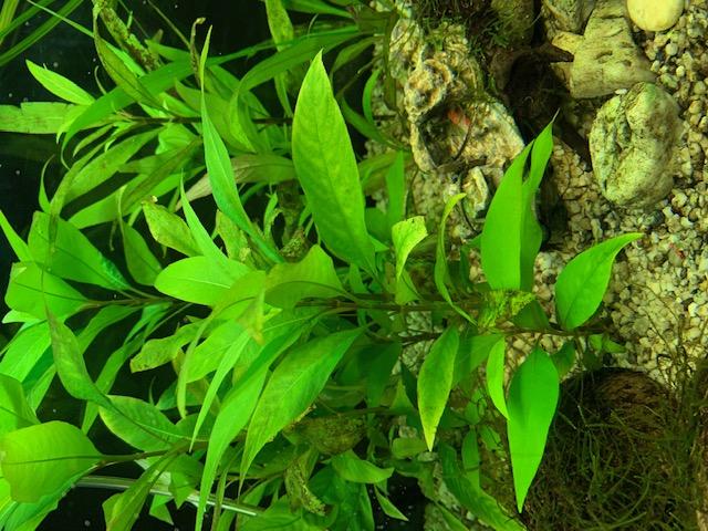[HELP] Plantes en mauvais etat Img_1214