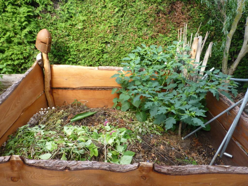 Solanaceae (Nachtschatten) - Tomaten & Chili, aber auch Petunien und andere Schönheiten - Seite 6 L1080135