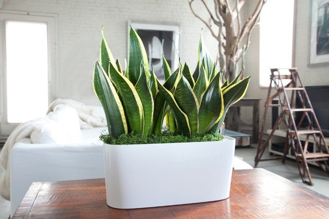 أفضل النباتات المنزلية لتُضيفها إلى منزلك! Intern13