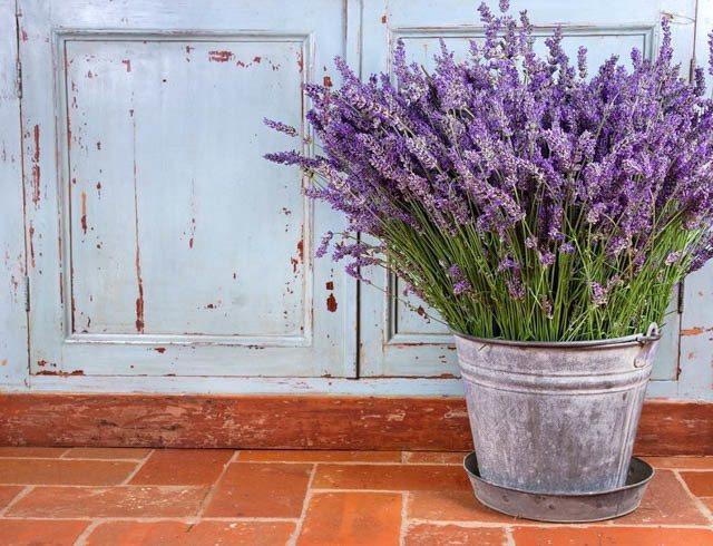 أفضل النباتات المنزلية لتُضيفها إلى منزلك! Intern14