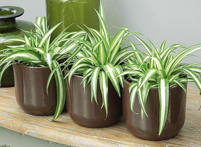 أفضل النباتات المنزلية لتُضيفها إلى منزلك! Intern15