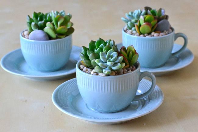 أفضل النباتات المنزلية لتُضيفها إلى منزلك! Intern17