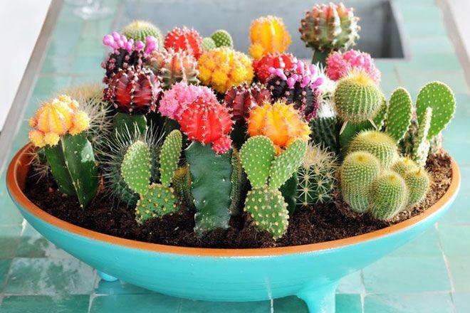 أفضل النباتات المنزلية لتُضيفها إلى منزلك! Intern18