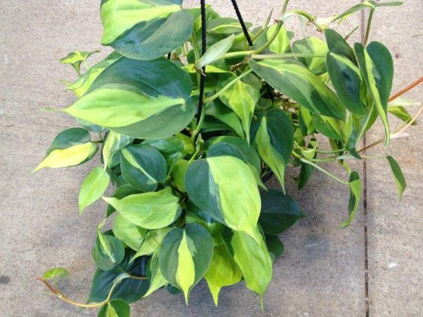أفضل النباتات المنزلية لتُضيفها إلى منزلك! Intern19