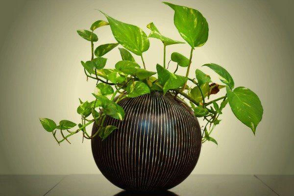 أفضل النباتات المنزلية لتُضيفها إلى منزلك! Intern20