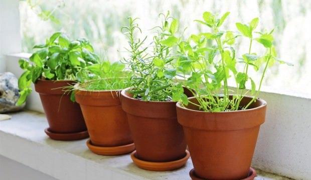 أفضل النباتات المنزلية لتُضيفها إلى منزلك! Intern21