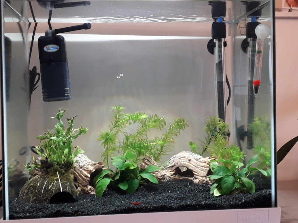 aquarium débutant 50L 20210110