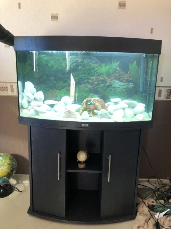 Question sur le lancement de mon aquarium (Débutant) 76be0f10