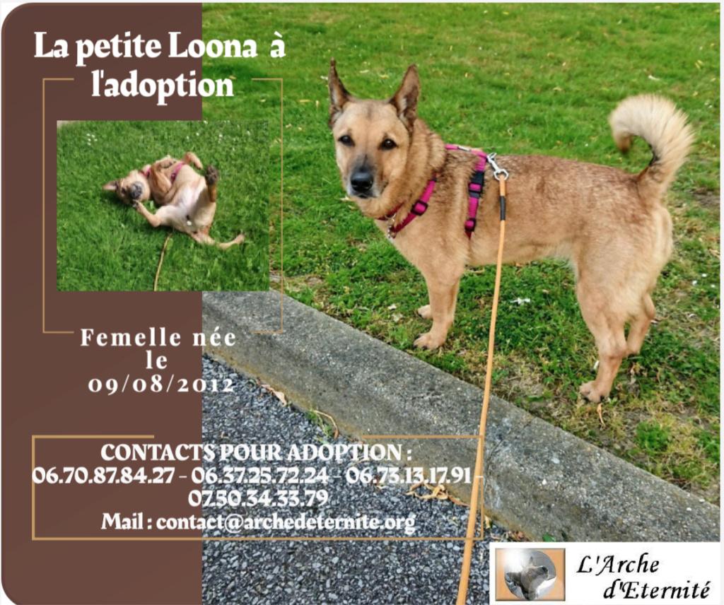 LOONA - femelle née le 09/08/2012, EN FA DANS LE 92 - sortie de l'équarrissage le 08/09/2020 - Parrainée par Sylvie H. SC-SOS-R-30MA- - Page 3 Captur11