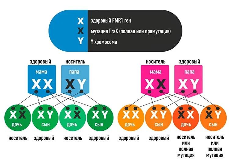Синдром Мартина - Белл или Синдром ломкой Х-хромосомы Aa10